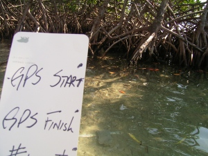 Practicing the methodology on Mangroves